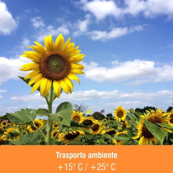 Trasporto_ambiente